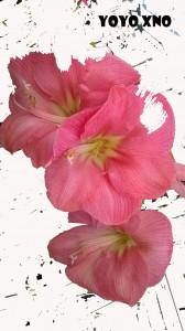 flowers lotta1