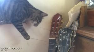 guitar yo