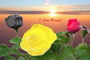 yoyobrusselflowers