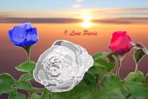 yoyoparisflowers
